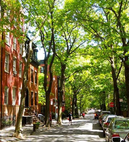 Calle con muchos árboles